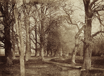 Benjamin Brecknell Turner, 'Trees (Pepperharrow Park),' ca. 1853, Phillips: The Odyssey of Collecting