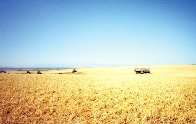 , 'Gallatin, Montana,' 2014, MIYAKO YOSHINAGA