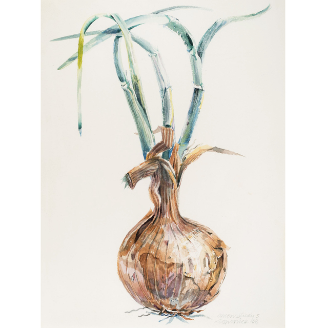 , 'Onion Study 5,' 1968, Allan Stone Projects