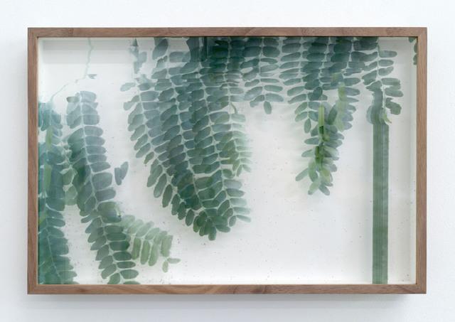 , 'Botanical Frottage - Irma (Oaxaca series),' 2017, PROYECTOSMONCLOVA