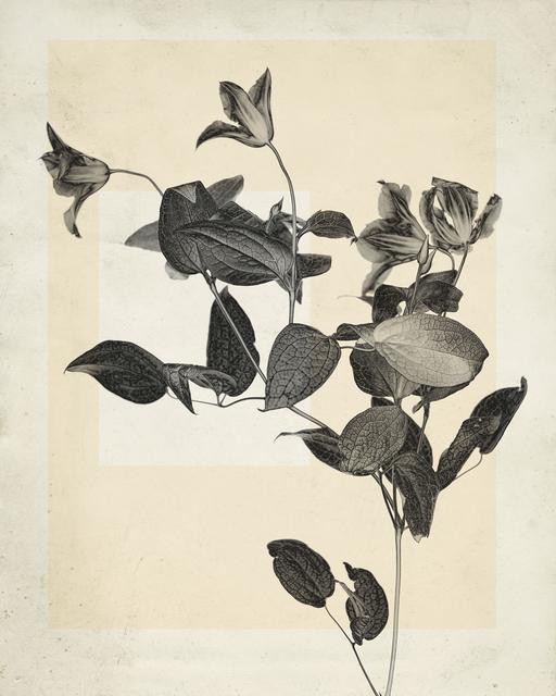 Thomas Ruff, 'flower.s.02', 2018, Mai 36 Galerie