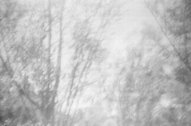 , 'Salix Alba II,' 2017, Galleri Duerr
