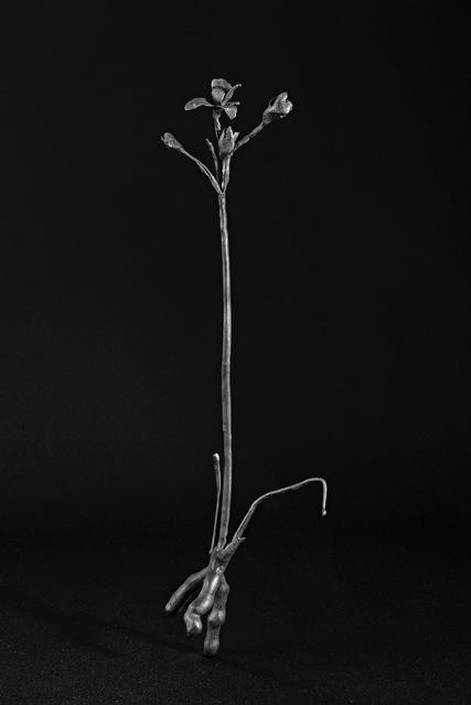 , 'Herbario de bronce,' 2014-2018, GALERÍA ETHRA