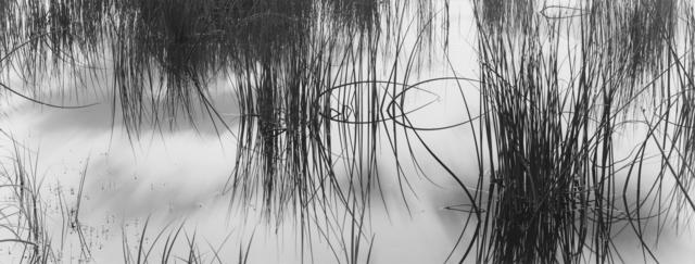 , 'Reeds #2 Colorado Rocky Mountains, CO,' 2005, photo-eye Gallery