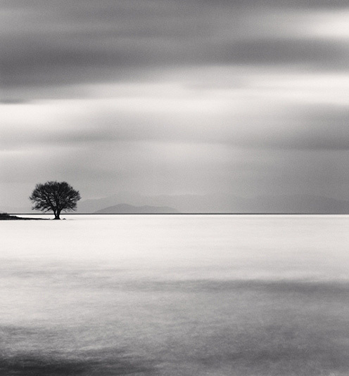 , 'Biwa Lake Tree, Study 5, Omi, Honshu, Japan,' 2012, Dolby Chadwick Gallery