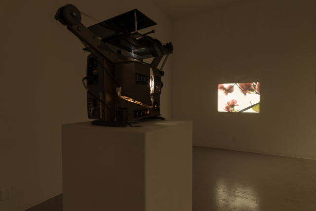 , 'Our Magnolia,' 2009, Los Angeles Contemporary Exhibitions