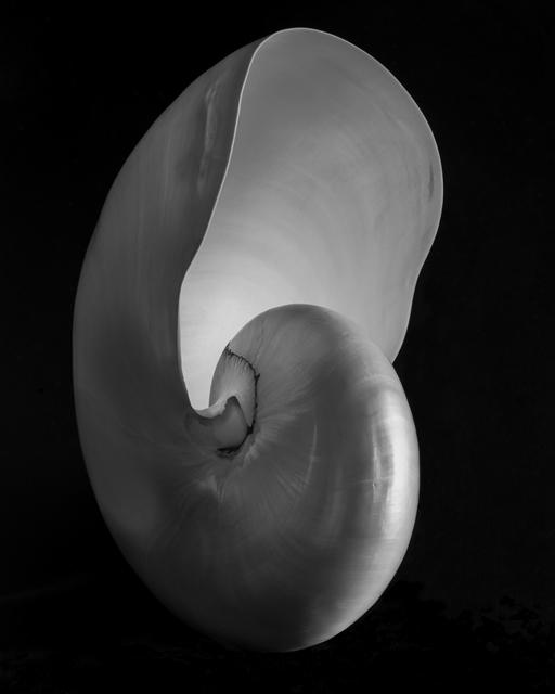 , 'Nautilus,' 2010, Susan Spiritus Gallery