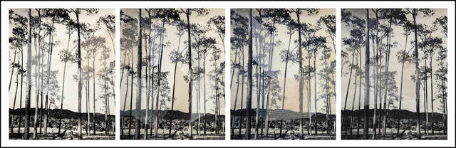 , 'Heavenly Sounds, Trees, 2016,' 2016, The Photographers' Gallery