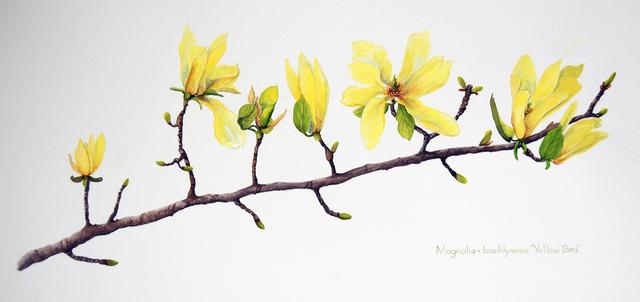 Sharon Way-Howard, 'Yellow Bird Magnolia Branch', 2019, The Galleries at Salmagundi