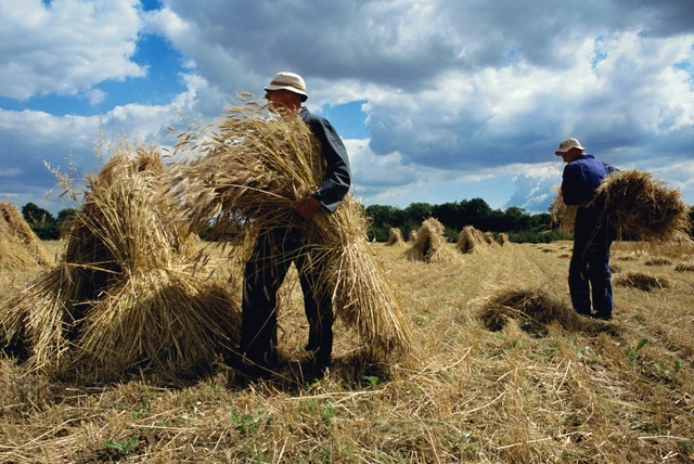 , 'Harvest, Suffolk,' 2007, Osborne Samuel