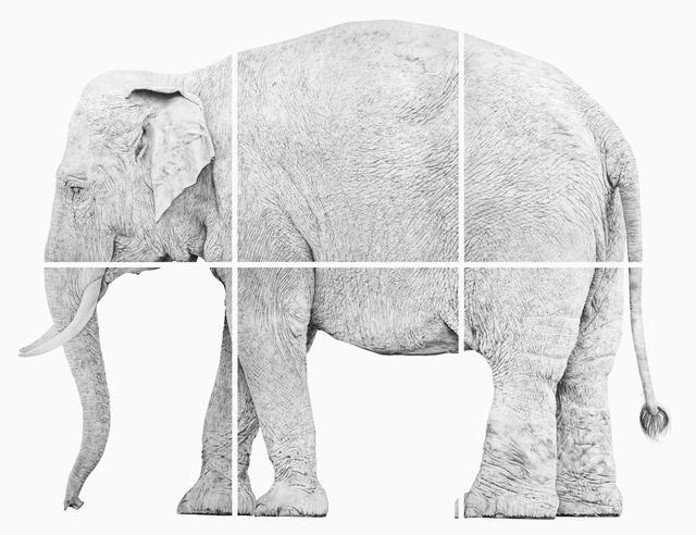 , 'Elefante,' 2017, Underdogs Gallery