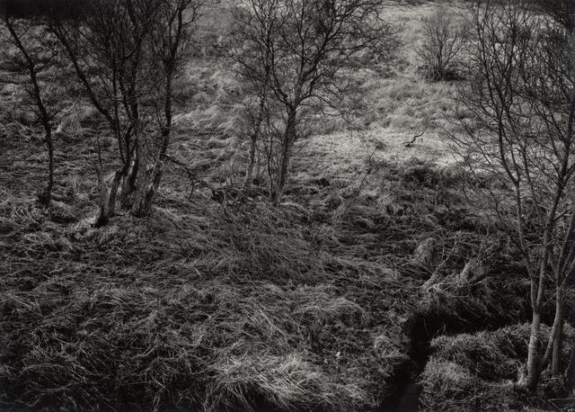 , 'First Frost - late Winter afternoon, Dualt Water / Dark Water, Ledllewyn, Killearn, Stirlingshire, Scotland,' 1988 / 2014, Ingleby Gallery