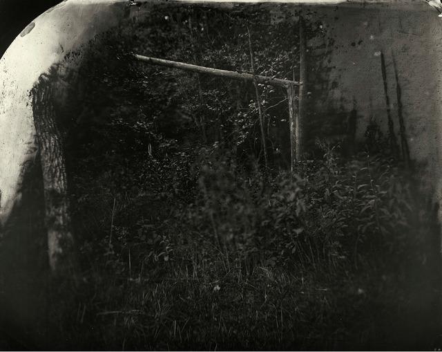 , 'Battlefields, Wilderness (Solarized Trees),' 2002, Gagosian