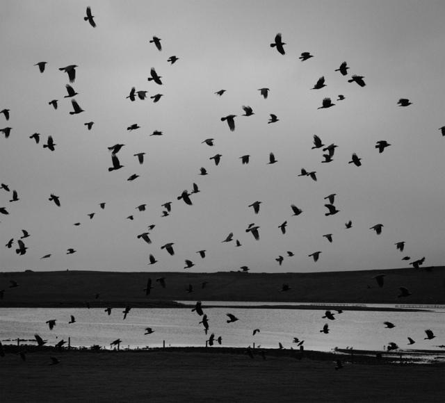 , 'Hamnavoe, Yell, Shetland,' 2016, The Photographers' Gallery
