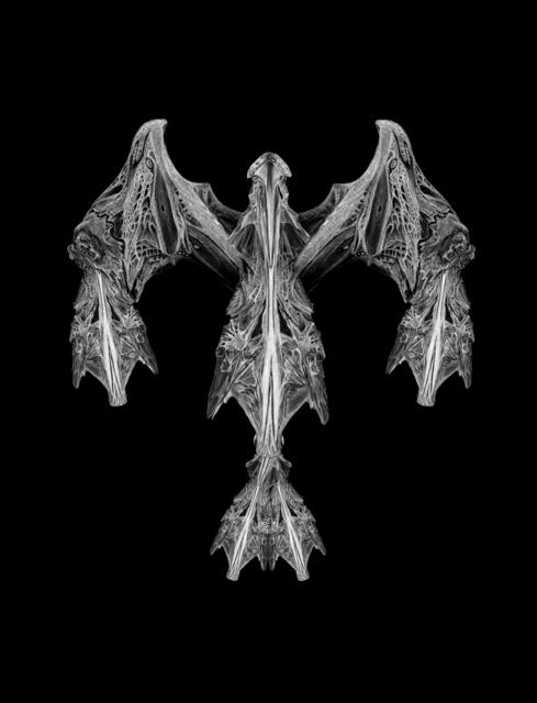 , 'X-Ray: Predator,' 2018, ArtHelix Gallery