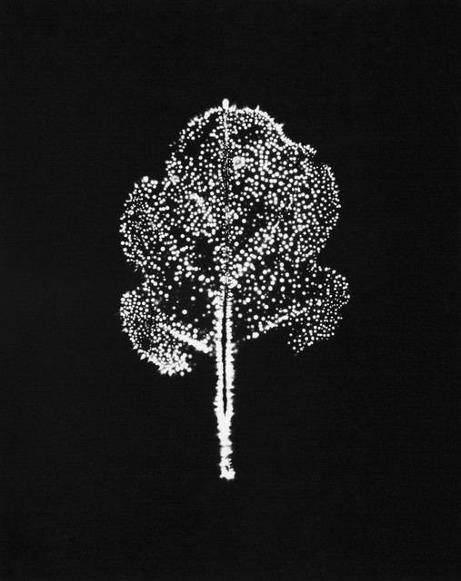 ", 'A Chrysanth Leaf 7, from the series ""Leaf of Electric Light,' 2012, CHRISTOPHE GUYE GALERIE"