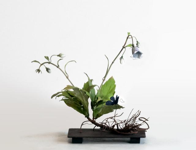 , 'Wild Campanula with Small Navy Butterfly,' 2019, Octavia Art Gallery