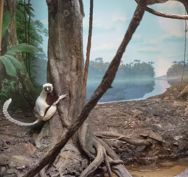 , 'Lemur and River,' 2015, Galerie Dumonteil