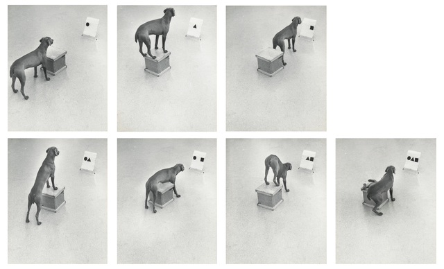 , 'Before / On / After: Permutations,' 1972, Lee Gallery