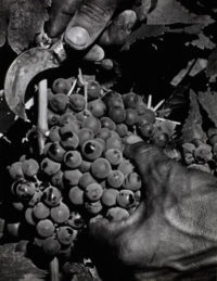 , 'Hand and Grapes,' ca. 1950, Scott Nichols Gallery