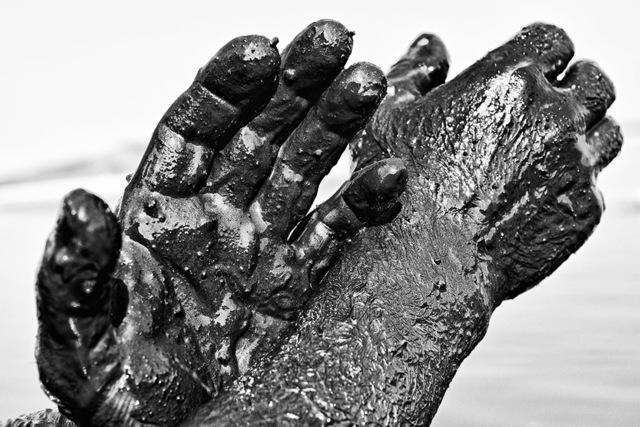 , 'Hands, Alykes,' 2015-2016, Photo12 Galerie