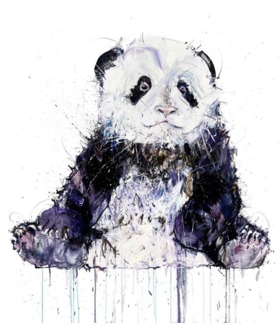 Dave White, 'Young Panda - AP', 2019, The Drang Gallery