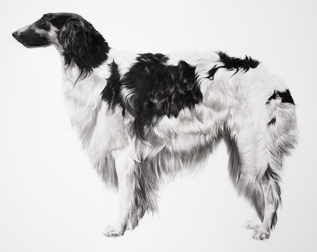 , 'Borzoi,' 2016, Purdy Hicks Gallery