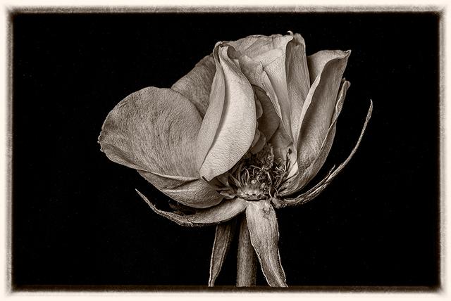Max Hilaire, 'Petals', 2018, MvVO ART