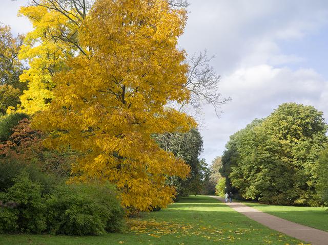 , 'The National Arboretum, Westonbirt, Gloucestershire, 2013,' 2013, Flowers