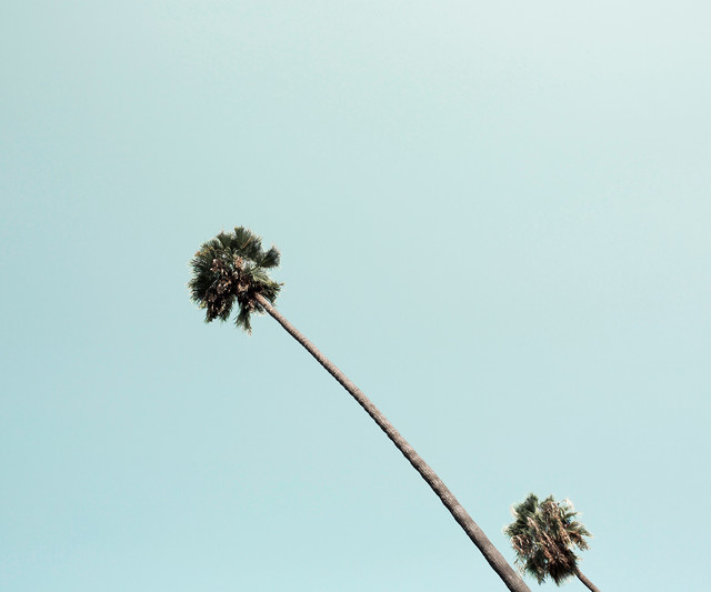 , 'Beverly Hills Palm,' , ArtStar