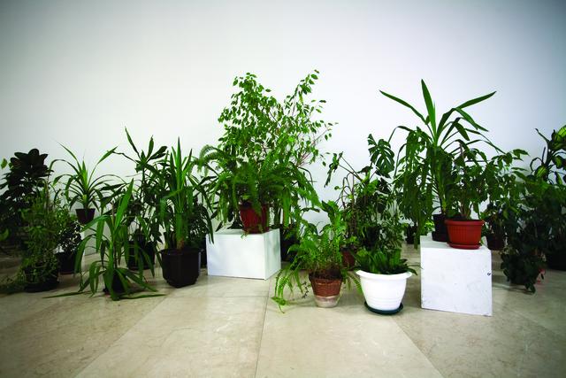 , '46 Plant Pots,' 2015, Art Encounters Foundation