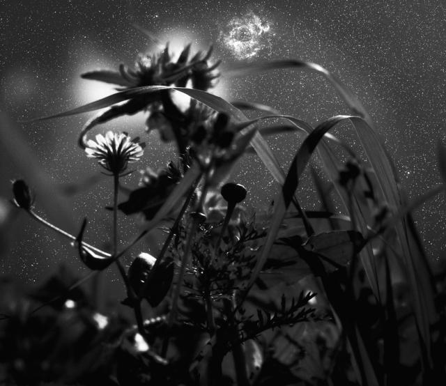 , 'Rosette Nebula,' 2001, Vision Neil Folberg Gallery