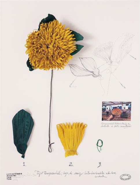 , 'herbario de plantas artificiales. Expedición México,' 2014, Proyecto Paralelo
