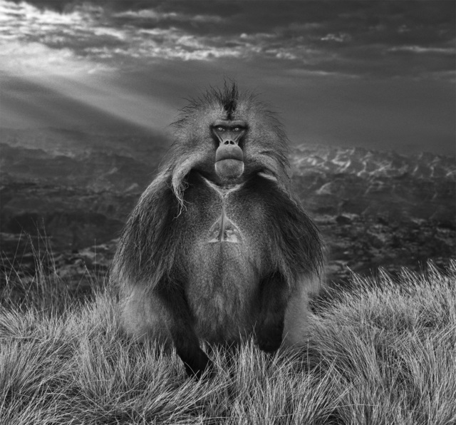 David Yarrow, 'Members Only', 2018, Photography, Archival Pigment Print, Hilton Asmus
