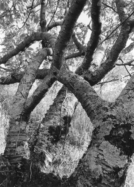 , 'Tuscan Trees #31,' 1996, Wirtz Art
