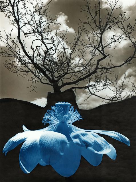 Jerry Uelsmann, 'Untitled (Blossom and Tree)', 1968, Scheinbaum & Russek Ltd.