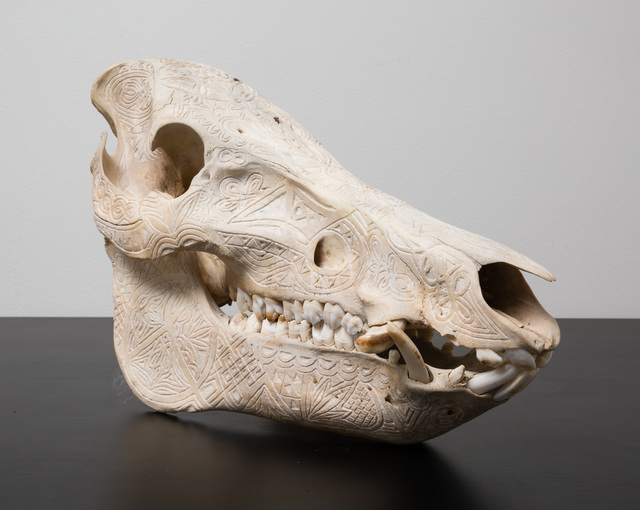 ", '""Adaptive Evolution"" (Hand Carved Florida Boar Skull),' 2015, PRIMARY"