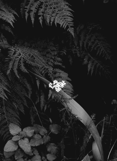 , 'The little White in my Garden,' 2015, Japan Art - Galerie Friedrich Mueller