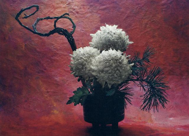 , 'Japanese Chrysanthemum,' , Gallery 270