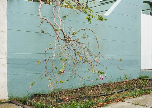 , 'Fuchsia,' 2014, Anglim Gilbert Gallery