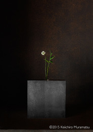 , 'A Stage White Clover 2-3,' , Galerie Marie-Robin