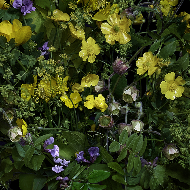 , 'Buttercups and Other Wildflowers,' 2019, Galerie de Bellefeuille