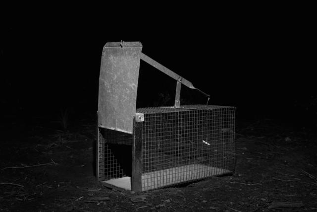 , 'Cage,' 2013, tegenboschvanvreden