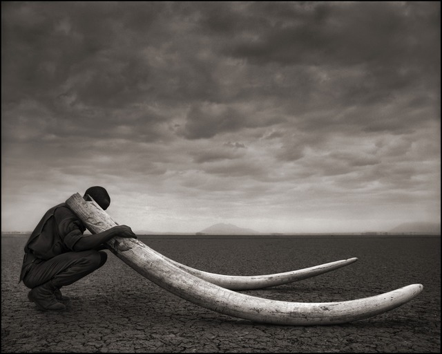 , 'Ranger with Tusks of Killed Elephant, Amboseli 2011,' 2011, photo-eye Gallery