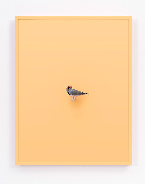 , 'Zebra Finch (Buttercup),' 2017, ClampArt