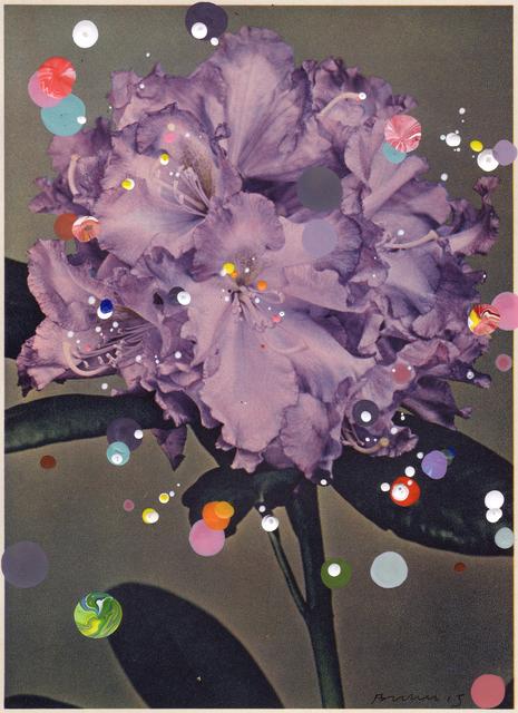 , 'No. 49, Rhododendron Hybridum Schubert,' 2015, Hales Gallery