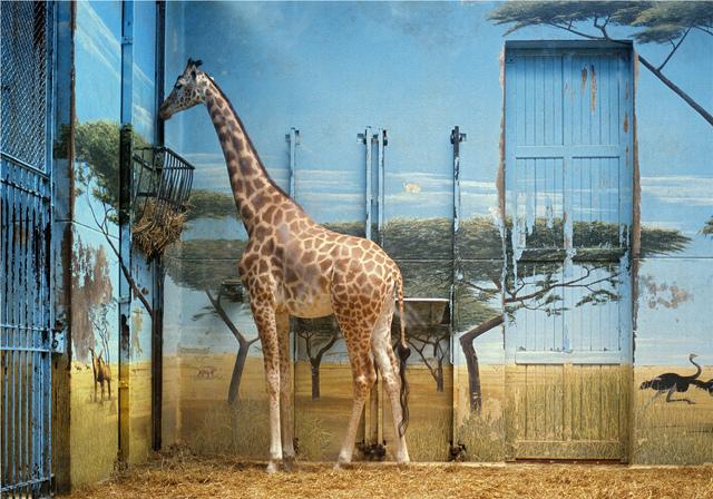 , 'Zoologischer Garten Paris II 1997,' 1997, Arken Museum of Modern Art
