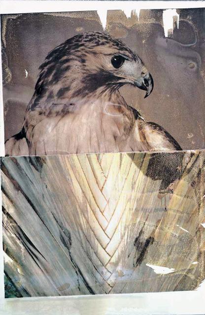 Robert Rauschenberg, 'Tribute 21: Nature', 1994, Hamilton-Selway Fine Art