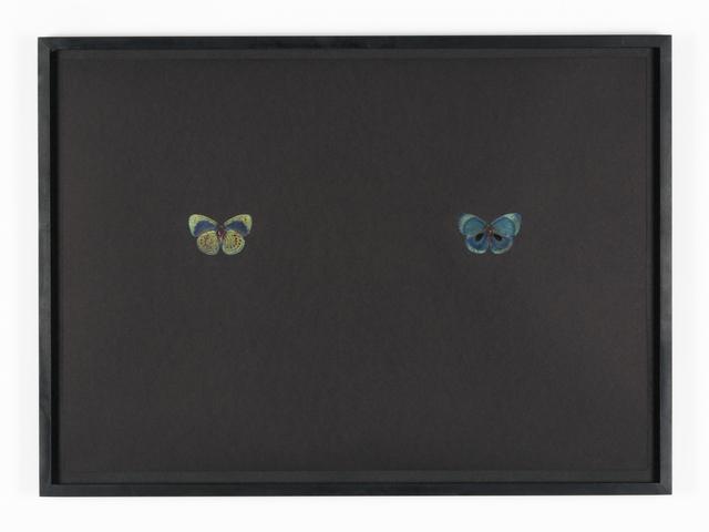 , 'Black Butterfly-Print #17,' 2017, Galerie Lisa Kandlhofer