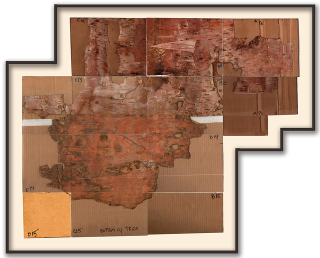 Maria Elena González, 'Bark Framed #5', 2012, Drawing, Collage or other Work on Paper, Birch bark, permanent ink, ink on cardboard, Hirschl & Adler